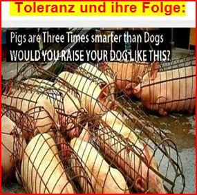 Schweine Toleranz