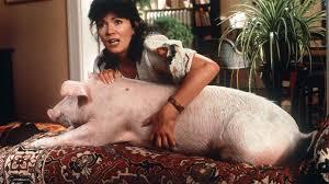 Iris und Schwein