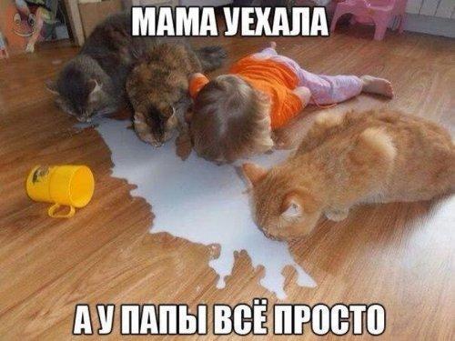 1455337427_prikol-27