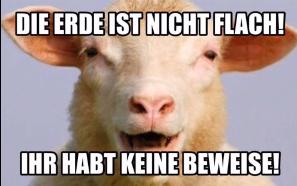 flaches Schaf